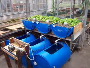 Backyard Crawfish Farming Aquaponics Course Cyprus Agro Industry Center