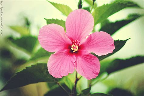 Sepatu Bunga Bunyi bunga sepatu by husniyuda on deviantart