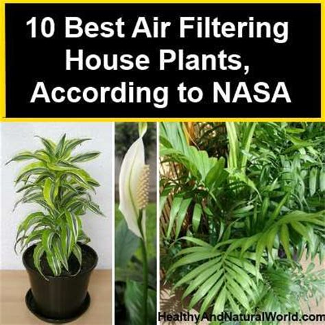 best indoor plants for oxygen these plants are oxygen bombs and they clean the air at