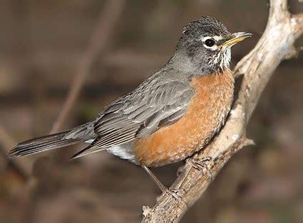 Backyard Birds Ontario The Argus This Week In Nature Holy Springtime Batman