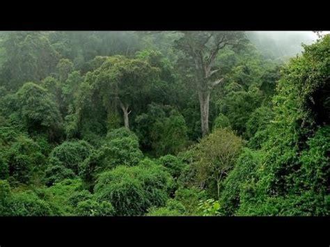 imagenes y mas imagenes los 10 bosques y selvas mas grandes y increibles del mundo