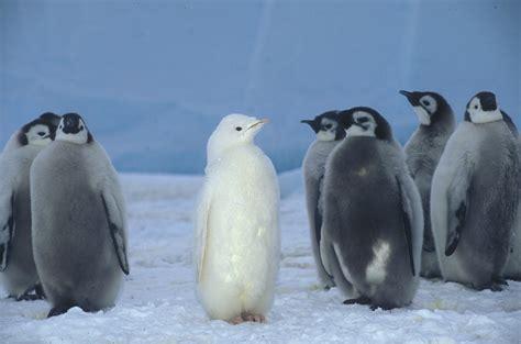 Penguin S penguin johns press