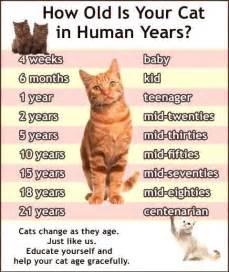 top 1 of cat years chart the truth about it