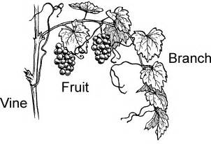 Vine And Branches Coloring Page coloring picture of a vine