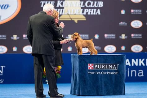 national show brussels griffon newton the brussels griffon is crowned best in show at the 2017 national show