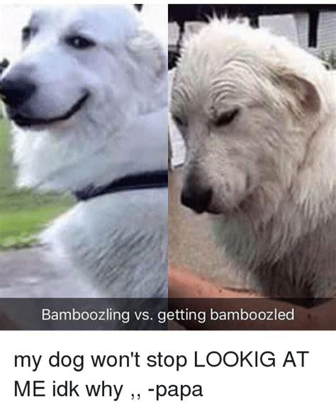 wont stop barking my wont stop barking 28 images why won t my stop barking fyi pets my won t stop