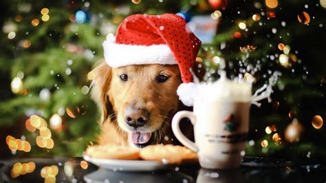 christmas wallpaper with dogs cute puppy spreading the christmas spirit wallpaper 21074