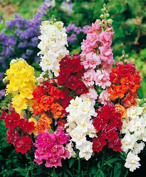 bocca di fiori acquista bocca di bakker