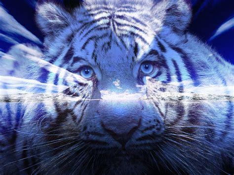 Blue Tiger planet buddha the blue tigers