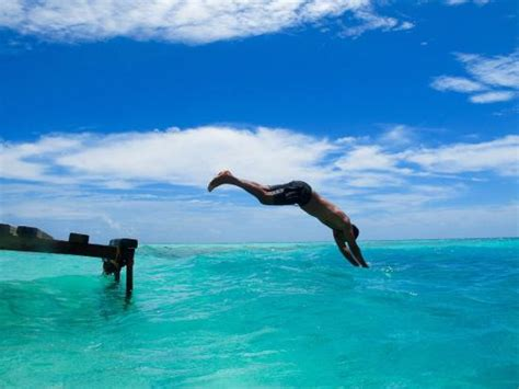 dive in dive in to experience the true of