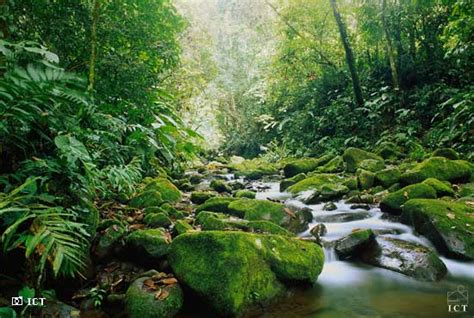 tropical comfort tours costa rica finding honest ecotourism challenges and benefits eco