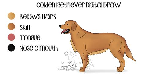 how to take care of a golden retriever golden retriever digital draw by simon93 ita on deviantart