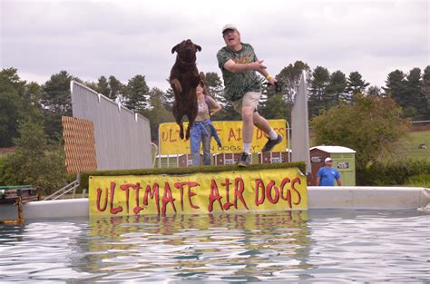 ultimate air dogs memorial day 2015 at the colts neck new jersey pet fair the hazlet news