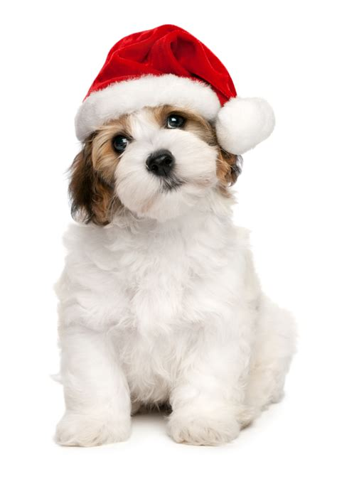 things to get your dog for christmas
