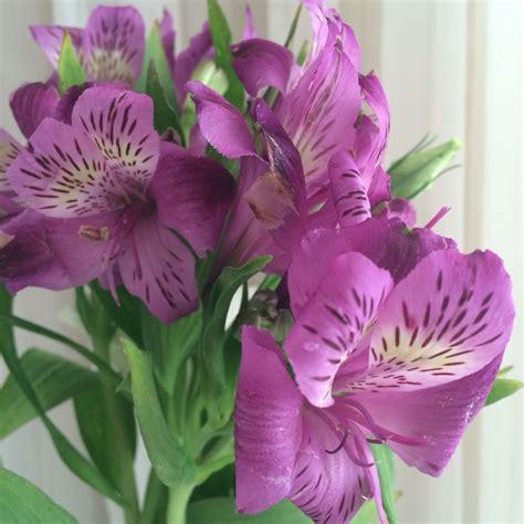 imagenes flores astromelias astromelias astromelias pinterest jardiner 237 a jard 237 n