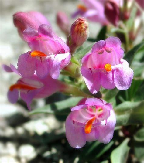 sia fiori artificiali fiori sia sia home fashion archives non mobili