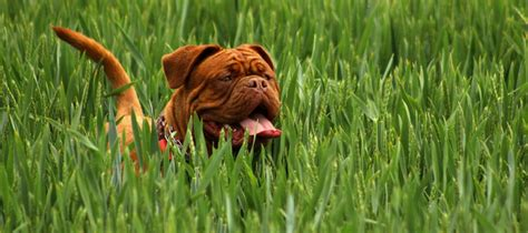 how to keep dogs lawn lawn care with pets how to keep a from digging abc