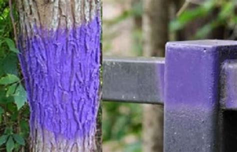 purple paint law understand the purple paint law and where it applies