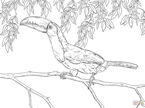 coloring pages birds realistic realistic parrot coloring page www imgkid com the