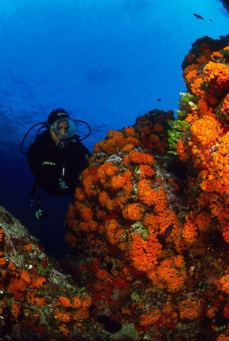 dive sicily dive sicily and the aeolian islands the best dive centers