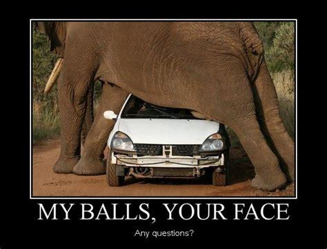 my balls elephant balls joke overflow joke archive