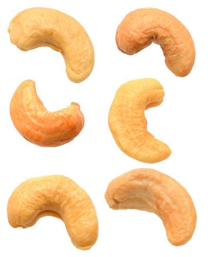 dogs cashews cashews for dogs or bad cheaply pet supplies