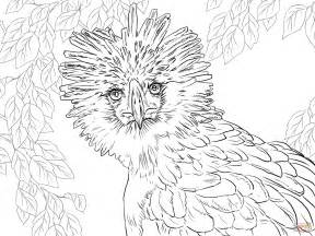 coloring books for adults for sale philippines philippine eagle portrait coloring page free printable