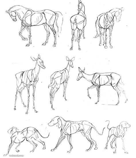 how to draw animals 25 beautiful animal drawings for your inspiration how to