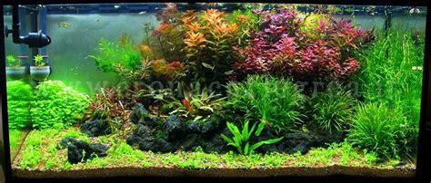 acquario casa amici animali gli acquari un vero ecosistema in casa