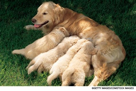 are dogs mammals issue viewer