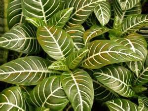 best home plants top 10 houseplants