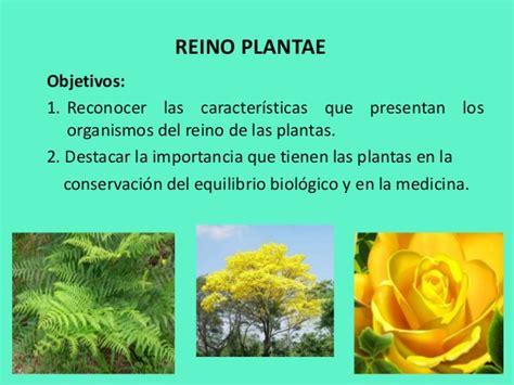 olguchiland las plantas ii reino plantae