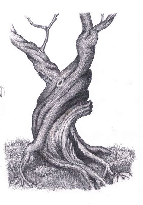 drawing images for tree drawing by lalupo on deviantart