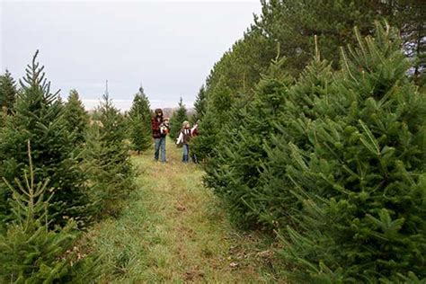 live christmas wreaths trees plants beautiful farm