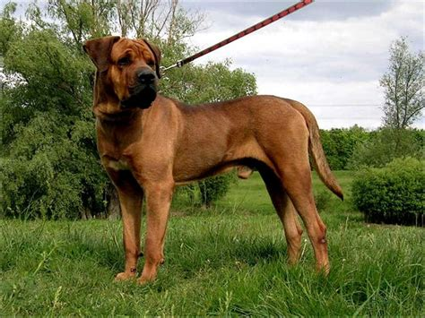 banned breeds which breeds are banned in the uk