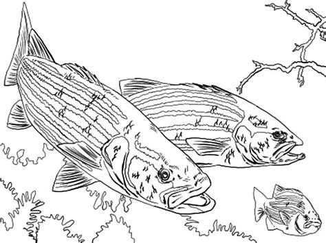 bass fish coloring pages free free coloring pages of guadalupe bass