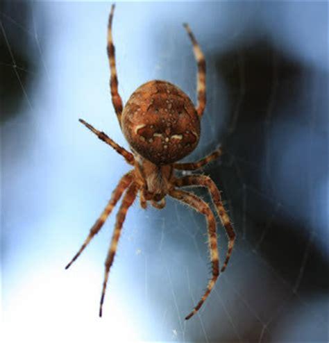 Garden Orb Weaver Spider by Travelmarx Garden Orb Weaver Spider