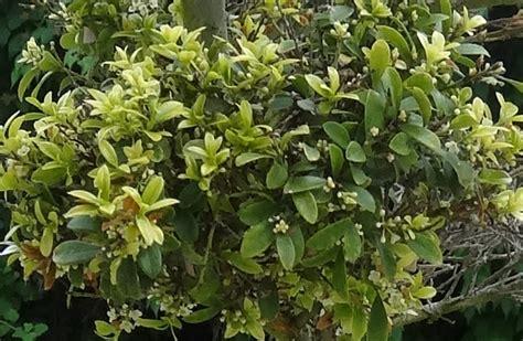 pflanze große blätter was ist das f 252 r ein garten bonsai und was fehlt diesem