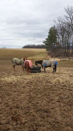 Hay Racks For Horses In Pasture by 1000 Images About Horses On Hay Feeder Tack