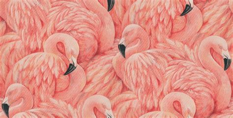 flamingo wallpaper on love it or list it in honor of the pink flamingo pink flamingos flamingo