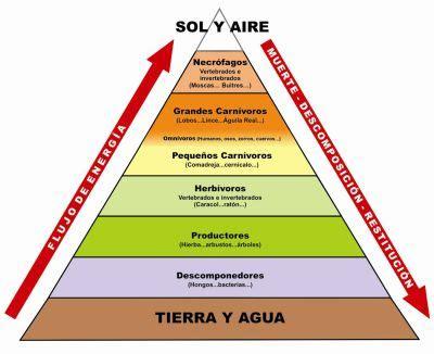 cadenas alimentarias piramides ecologicas diccionario ecologico pir 225 mide tr 243 fica