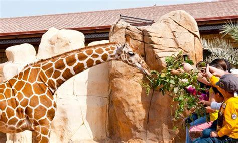 emirates park zoo emirates park resort zoo in abu dhabi groupon getaways