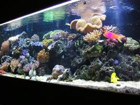 3 tips on starting a saltwater aquarium west palm beach