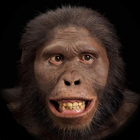 africanus el hijo del australopithecus africanus the smithsonian institution s human origins program