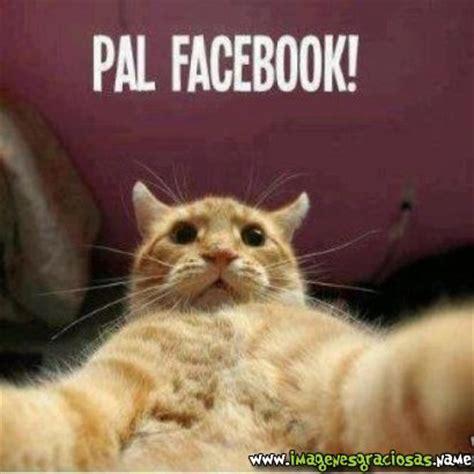 imagenes navide 241 as chistosas para facebook imagenes de imagenes de humor im 225 genes page 2