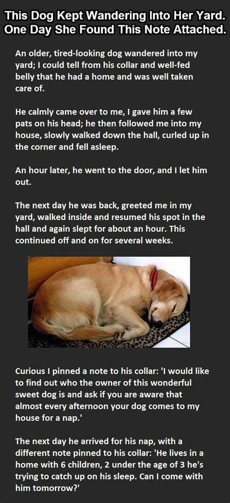 with puppies story 88 best sleep images on images photos and pics