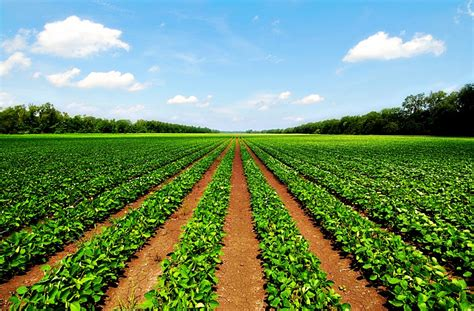 agricultural science agriculture science scope and its fields hubpages