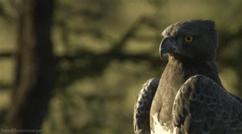 matthew rhys martial arts martial eagle gifs find share on giphy