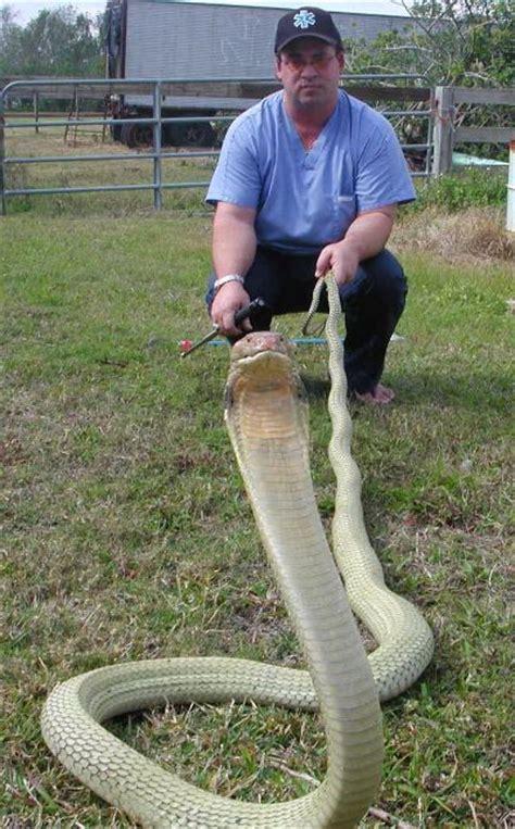 facts about serpentology hunter serpentology llc