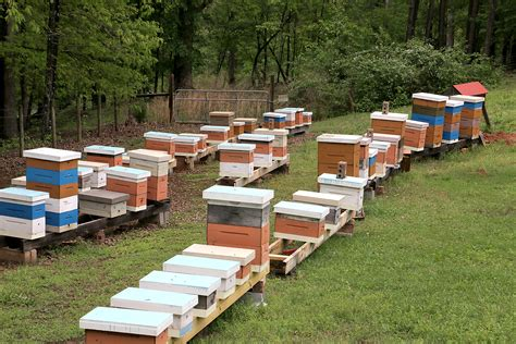 top bar hive entrance location top entrance bee hives keeping backyard bees